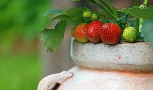 5 Examples of Beautiful Edible Garden Containers