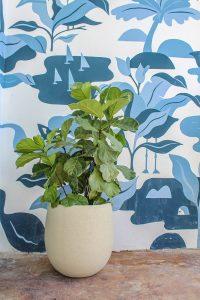 fiddle leaf fig planter