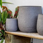 The Best Planters for Your New Houseplant Hobby